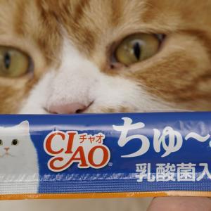 猫の日のおやつ