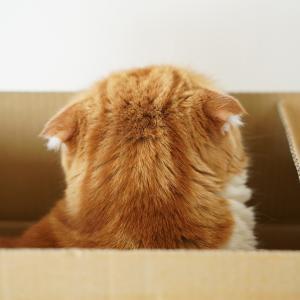 箱に入るとかわいくなる?