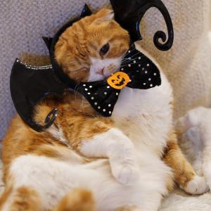 ハロウィンに向けて~夜の仮装~