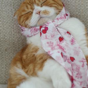 短めスカーフのアレンジ