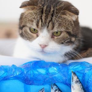 いつのまにか高級魚のアレ