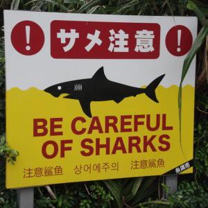 沖縄のサーフィン