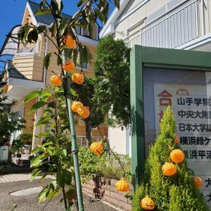 2019 本牧かぼちゃまつり 2