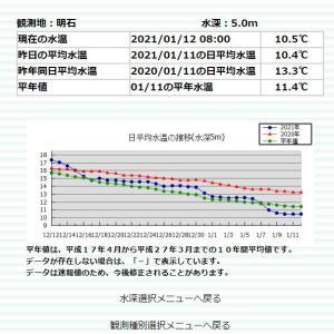 海水温が下がりすぎです1月11日