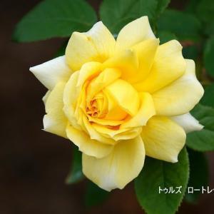 10/17花日記(響灘グリーンパークの花たち-2:作出国:仏国のバラたち)