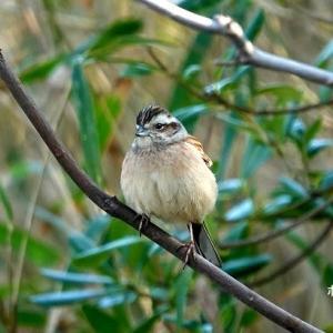 2/27探鳥記録写真(はまゆう公園の鳥たち:ジョウビタキ♂、ホオジロ♂&♀、ほか)