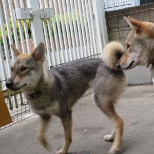 見張り、警告する犬たち ~うちの血糖アラートと回想~