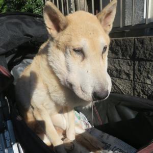 散歩中に犬のヨダレで検索 ~いなかっぺ大将の涙/気分転換~