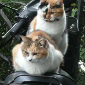 足がつる・・・ツッパリ猫