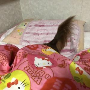 尻尾だけ〜♡