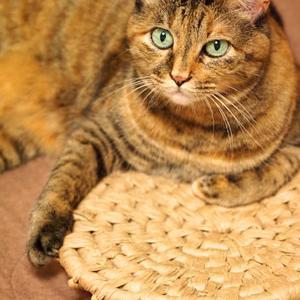 猫さんのワクチン&謎のぽっこり