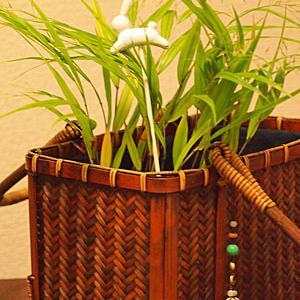 白芽奇蘭とウサギ型フィナンシェ