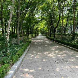 外を歩くと気持ちが良い!(韓国生活)