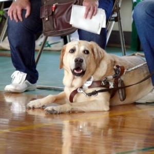 身体障がい者補助犬(盲導犬、介助犬、聴導犬)の使用者を募集ー大阪府
