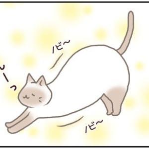 ネコごろね 第137話:【あれが見たい!】