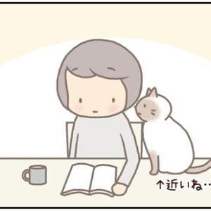 ネコごろね 第174話:【ながらは許しません!】