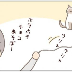 ネコごろね 第179話:【複雑な猫心】