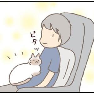 ネコごろね 第191話:【チョコナースさん♩】
