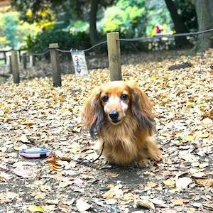 老犬カワイイ♡