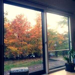 秋晴れと干し柿作りとホルモンの31日