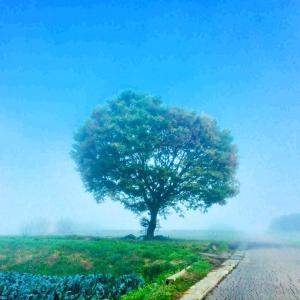 11月の朝は濃霧の1日