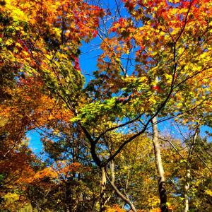 秋晴れの三連休初日の2日