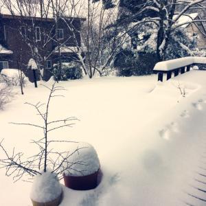 今年1番の大雪の29日
