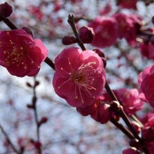 初春に一句♪