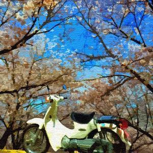 なんて「絵」になる、桜と愛車♪