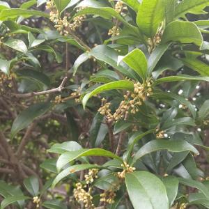 秋の花 秋の香り