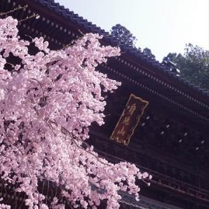 身延山 久遠寺 桜