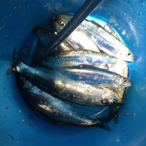 回遊魚は恐ろしい