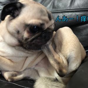 銀ちゃんの足がカイカイ〜!