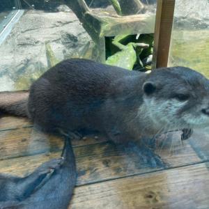 銀ちゃんとあずは水族館におる生物と似ている