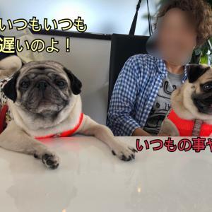 あずのうちの子記念日はevery one's cafeへ!
