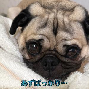 寝顔がブスすぎてやばい。