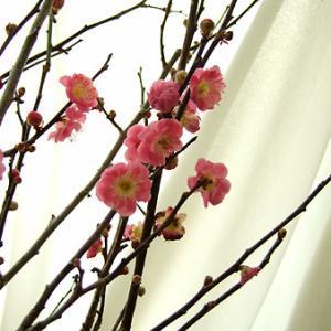 お正月アレンジ【松◇竹◆梅】