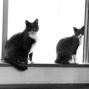 新入り猫 ビジューの近況