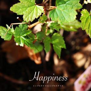シアワセのタネ|ベランダガーデン、自然の生命力に癒される