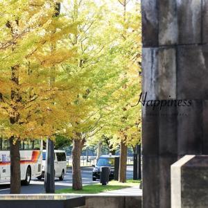 シアワセのタネ|東京丸の内&皇居前、銀杏の紅葉がはじまっています!