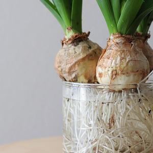 花のある暮らし|春の球根鉢を活けて愉しむ