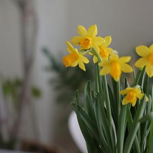 一足先に春の花を楽しむ