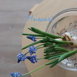春の球根シリーズ2|無造作に活ける