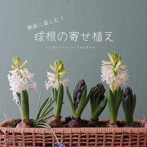 春の球根で楽しむ|ヒヤシンス&ムスカリの寄せ植え