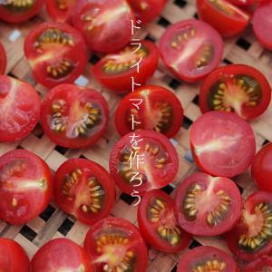 特売ミニトマト de 自家製ドライトマトづくり