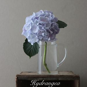 旬の花を楽しむ 紫陽花