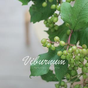 花がある暮らし|夏の実ものがかわいい♡ ヴィバーナムコンパクタ