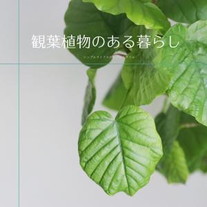 観葉植物のある暮らし|成長期の我が家の緑のある暮らし