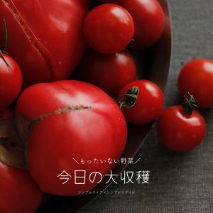 大量ゲット!もったいない野菜 de トマトの水煮を作ろう!