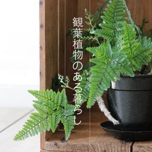 観葉植物のある暮らし|トキワシノブ